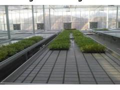 温室潮汐育苗床潮汐式灌溉优势明显