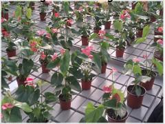 花卉温室苗床价格/生产厂家新报价