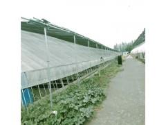 新式保温大棚 鹌鹑养殖大棚 单拱蔬菜大棚 辉腾温室