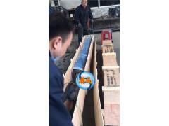 丝瓜视频app下载天津200QJ40-198-37KW深井泵潜成厂家现货供应