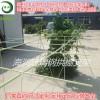 河北海润供应可定制高弹苗木支撑杆玻璃钢拱棚杆